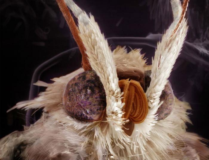 Необычные портреты знакомых вам насекомых (9 фото)