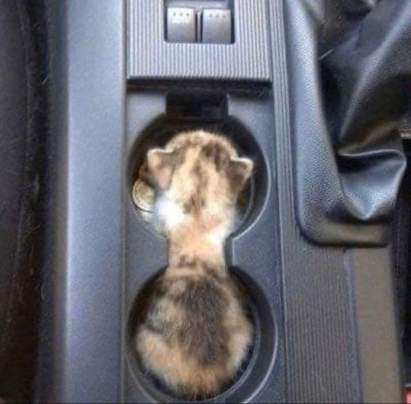 Забавные коты, у которых сбились заводские настройки (19 фото)
