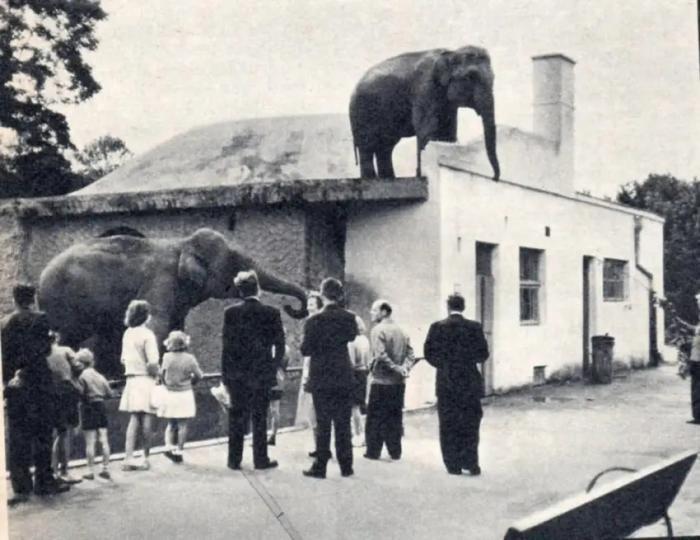 В Польше слонов от стресса будут лечить марихуаной (3 фото)