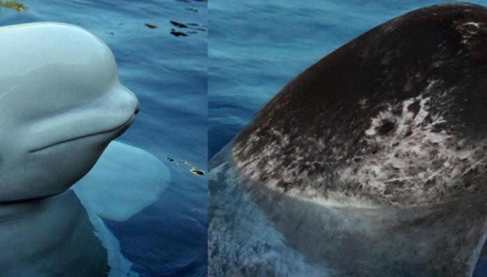 Как могут выглядеть животные в будущем после изменения климата (8 фото)
