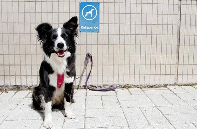 Отношение к домашним животным в разных странах (8 фото)