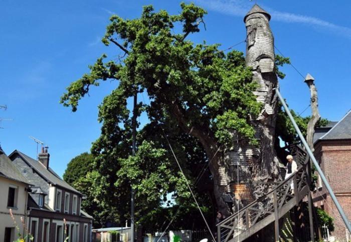 Необычные сооружения в гигантских деревьях (12 фото)