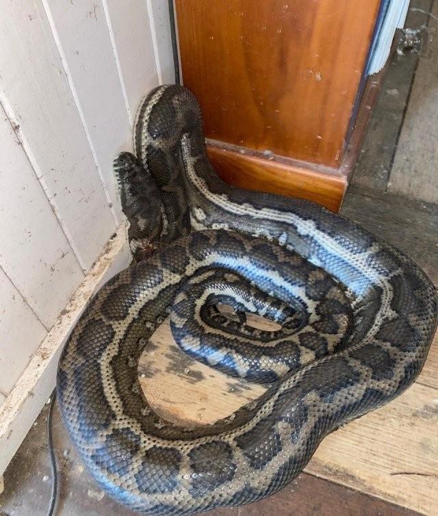 Вернулся из отпуска и обнаружил в своем доме необычных гостей(10 фото)