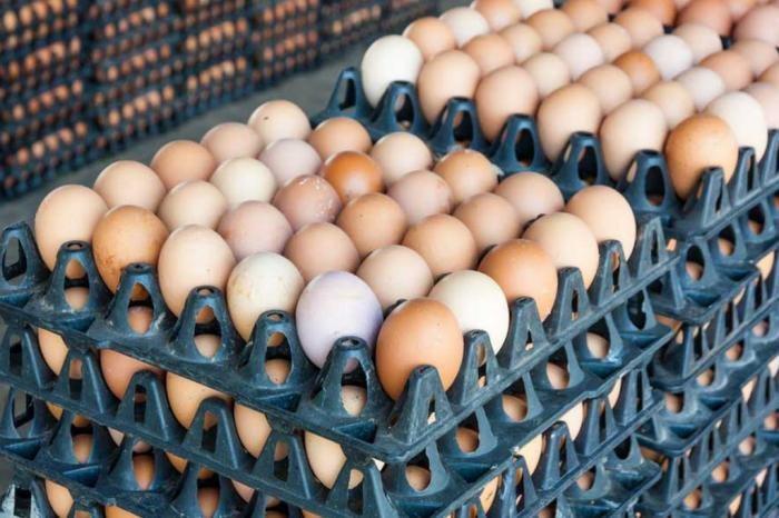 Сколько куриные яйца хранятся в холодильнике (4 фото)