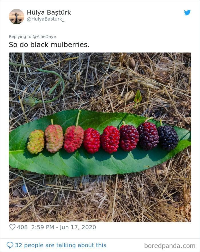 Люди делятся фотографиями жизненных циклов растений и других живых существ (15 фото)