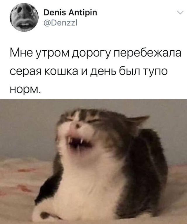 Подборка прикольных фото (31 фото) 16.09.2020