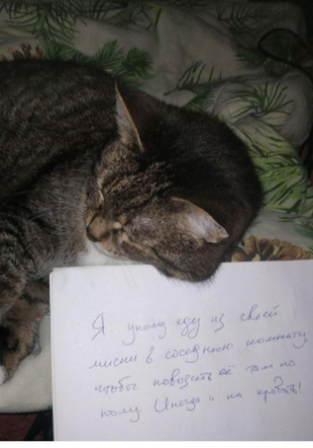 Пользователи рассказали, в чем провинились их коты (15 фото)