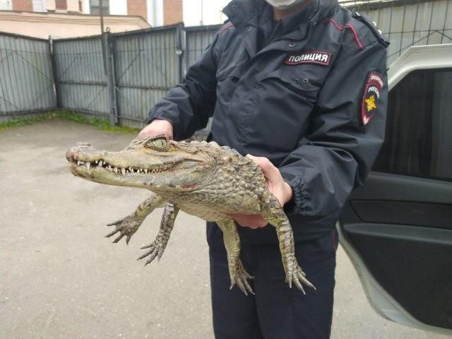 Житель Волгоградской области и его необычный питомец (4 фото)