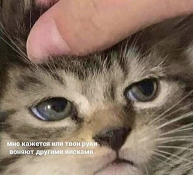 Лучшие мемы, истории и картинки из Сети (14 фото)
