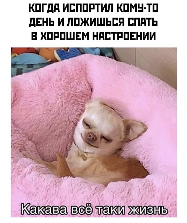 Подборка прикольных фото (30 фото) 21.10.2020