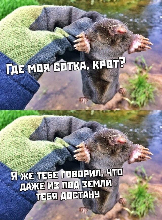 Подборка прикольных фото (30 фото) 03.11.2020