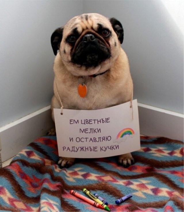 Хозяева фотографируют своих питомцев со смешными табличками, на которых написано, в чем провинились животные (15 фото)