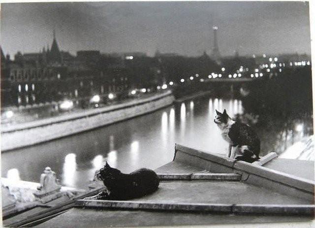 Яркие исторические фотографии из прошлого (15 фото)