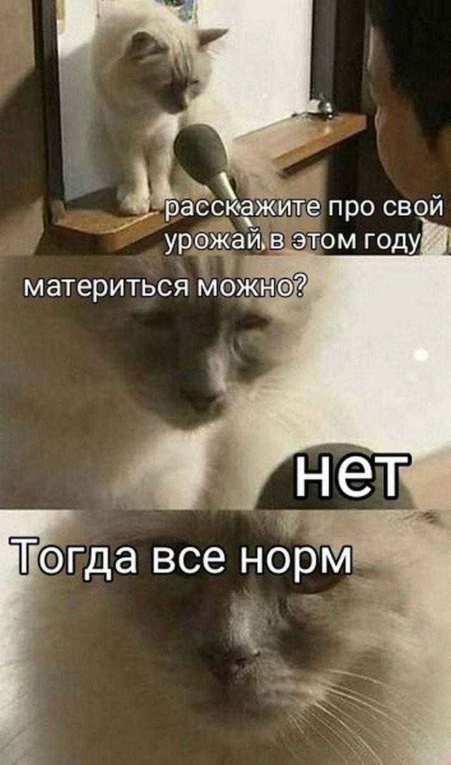 Мемы и шутки, которые будут понятны только пенсионерам (15 фото)