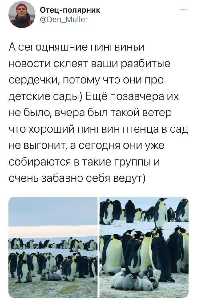 Записки полярника: пользователь Твиттера поделился своими впечатлениями об экспедиции в Антарктиде (10 фото)