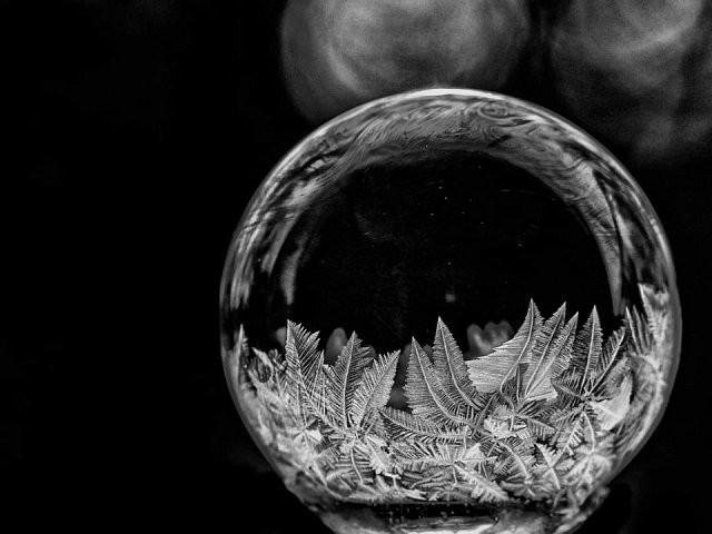 Мир через микроскоп: интересные макрофотографии (15 фото)