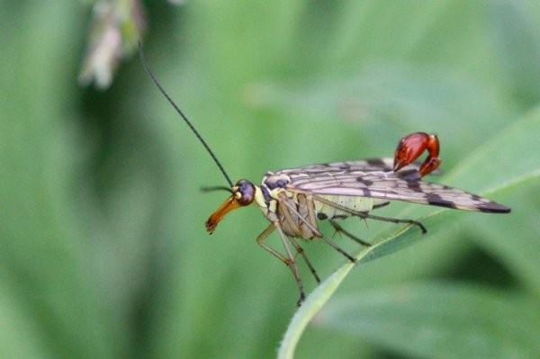 Удивительные создания природы и интересные факты о них (16 фото)