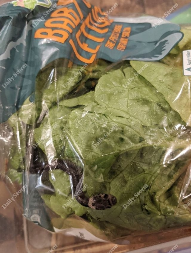 Мужчина в Австралии купил салат с одним из самых ядовитых существ в стране (3 фото)