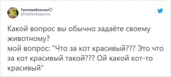 """""""О чем вы говорите со своими животными?"""": забавный тред о питомцах в Твиттере (14 фото)"""