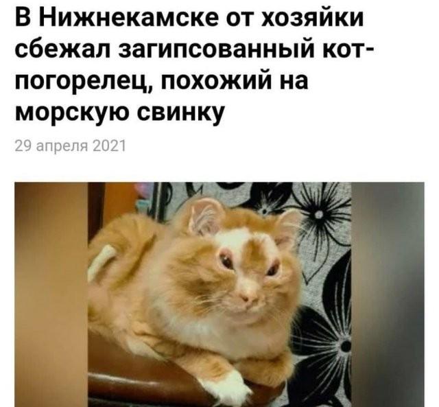 Странные и кликбейтные заголовки из СМИ (15 фото)