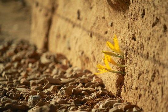 Жизнь пробьется везде! (24 фото)