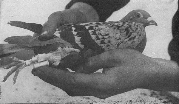 Самые известные животные, которые оставили свой след в истории (фото)
