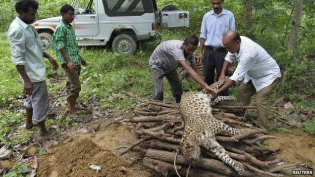 Индианка (56 лет) одержала победу в смертельной схватке с леопардом