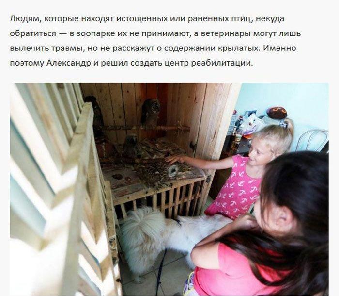 Хищные постояльцы крохотной однокомнатной квартиры (11 фото)