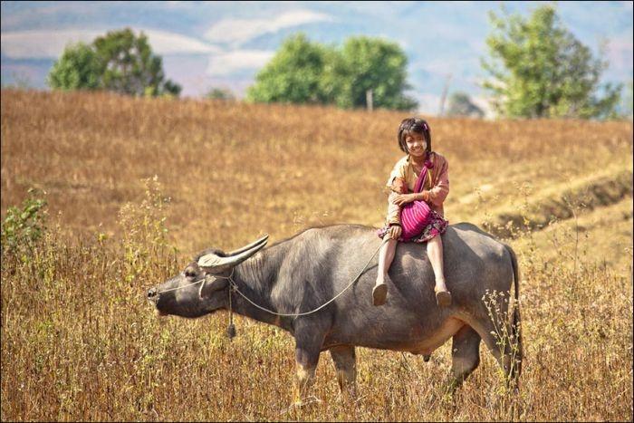 Сложный путь в школу в разных странах мира (25 фото)