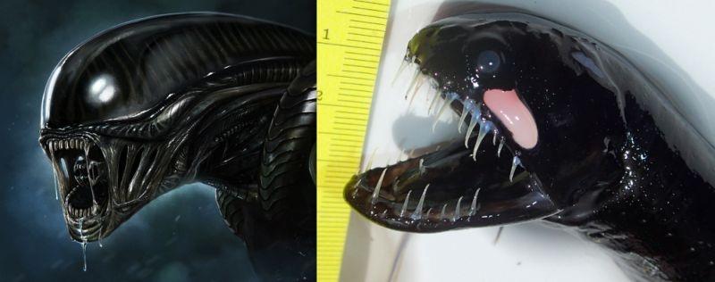 Океанологи выловили из воды личинку чужого (4 фото)