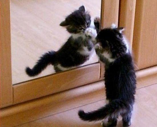 Вездесущие коты (17 фото)