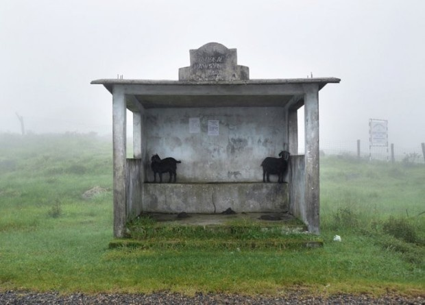 Самое дождливое место на Земле (10 фото)