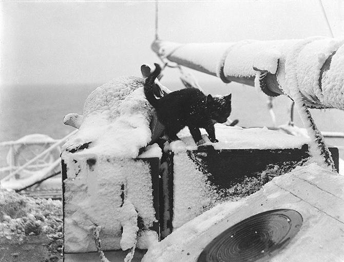 Как кошки в море ходили (29 фото)