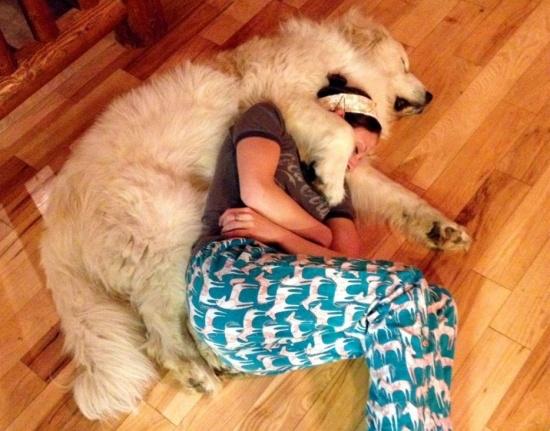 Милые псы, которые плюют на личное пространство (20 фото)
