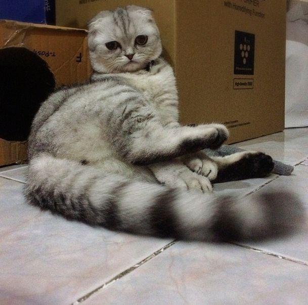 Печальный котик Little P (24 фото)
