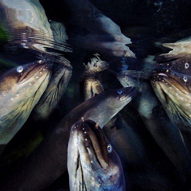 National Geographic в Instagram (38 фото)