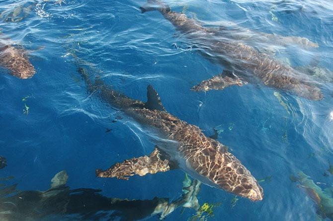 Как можно поймать акулу за хвост? (18 фото)