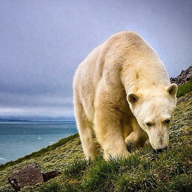National Geographic в Instagram (38 фото)