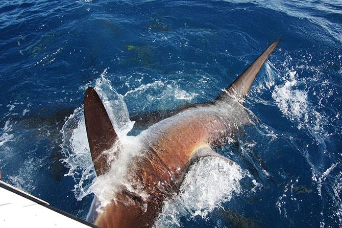 сонник ловить акул