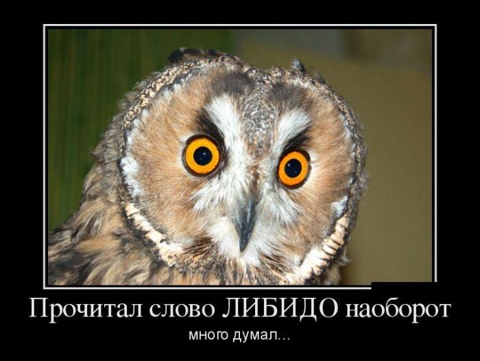Демотиваторы 09.09.2014 (29 фото)