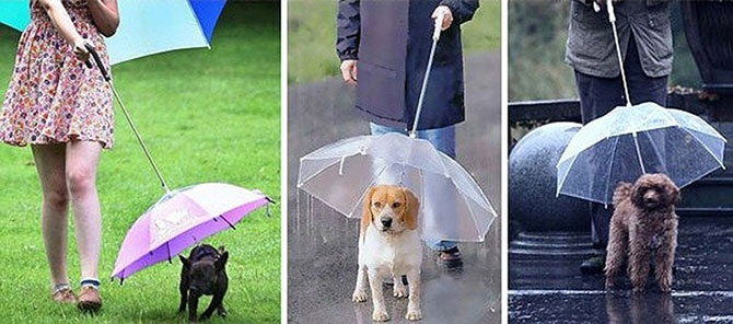 19 удивительных зонтов для осени (36 фото)