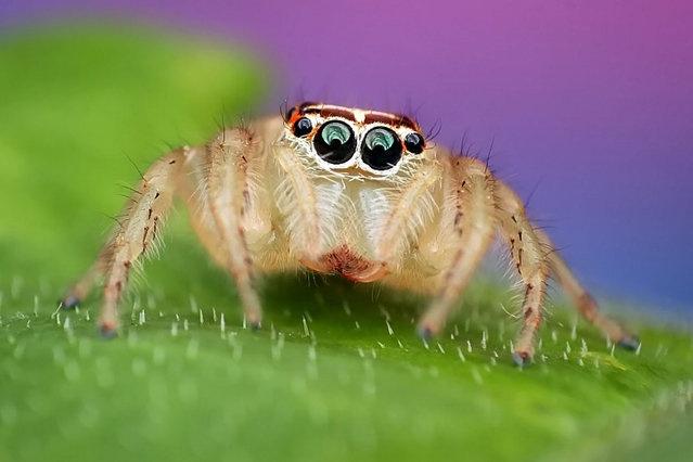 Страшно заглянуть в эти глаза? (17 фото)