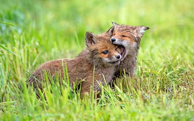 Фотографии животных за неделю (22 фото)
