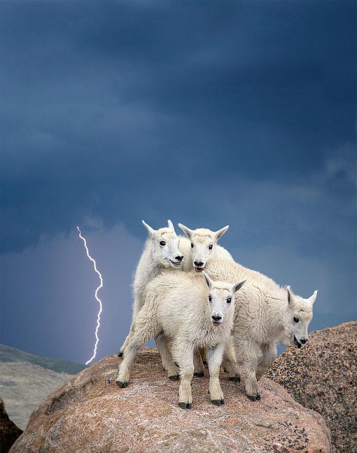 Победители конкурса Smithsonian Wilderness Forever (15 фото)