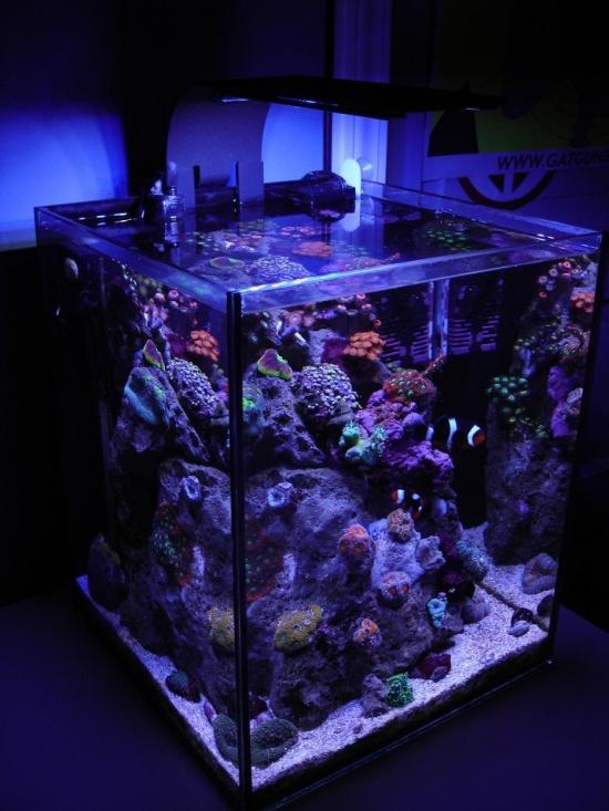 Хочу аквариум! (30 фото)