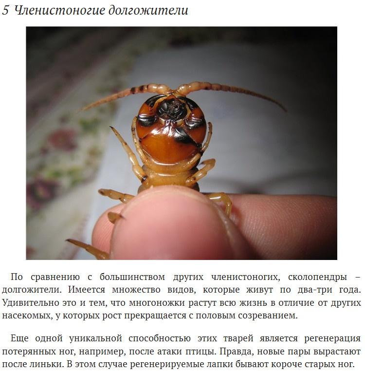 Интересные факты о сколопендрах (8 фото)