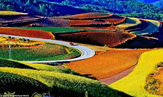 Красота красных террасовых полей в Китае (20 фото)