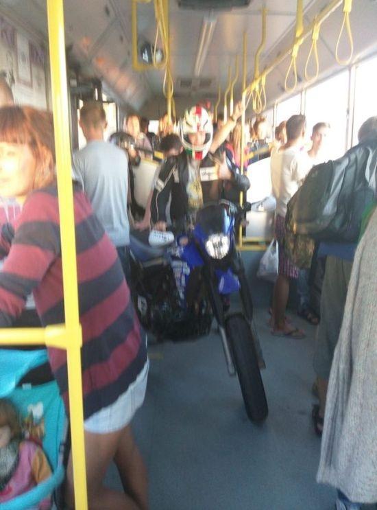 Необычный пассажир городского транспорта (3 фото)