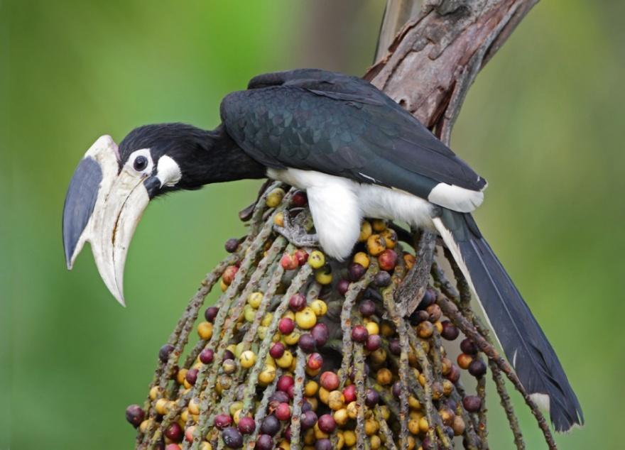 Экзотические птицы невиданной красы (12 фото)