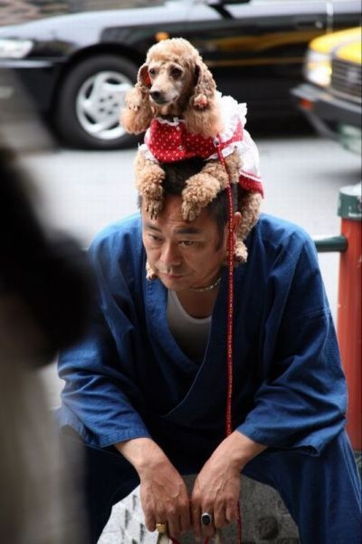 Это можно увидеть в Японии (55 фото)